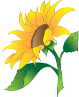sunflower logo